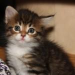 regina-cat1